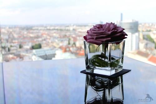 rose_sofitel